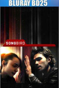 Songbird 2020 BD25 Sub
